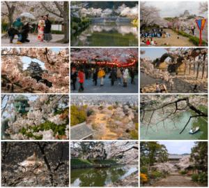 Norbert Woehnl Photography - Digital Portfolio Japanese Cherry Blossoms