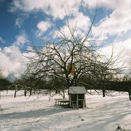 Winter Snow Orchard, Nehren, Germany Photo