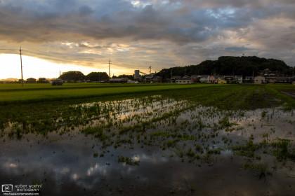 Rice Fields at Dusk, Okayama, Japan Photo