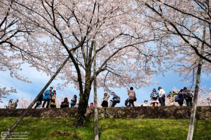 Sakura Hanami at the Keage Incline, Kyoto, Japan Photo