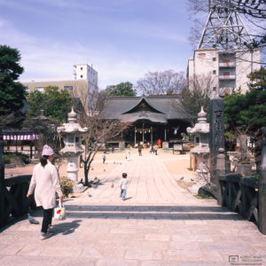 Chasing Pigeons, Yohashira Shrine, Matsumoto, Japan Photo