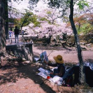 Cherry Blossom Painter, Nara, Japan Photo