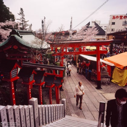 Cherry Blossom Festival Day, Sanko Inari Shrine, Inuyama, Japan Photo