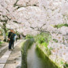 A scene of Hanami (花見; Cherry Blossom Viewing) along the Philosopher's Path in the Higashiyama district of Eastern Kyoto, Japan.