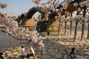 Cherry Blossom Season at Kintai Bridge in the city of Iwakuni in Yamaguchi Prefecture, Japan.