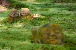 Moss Garden Stone Buddhas, Sanzen-in Temple, Ohara, Kyoto, Japan Photo