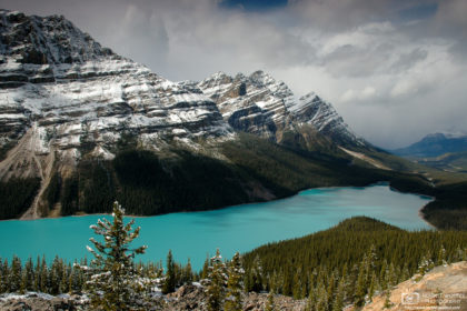 Peyto Lake in Banff National Park in the Canadian Rockies, as seen from the Bow Summit Lookout.