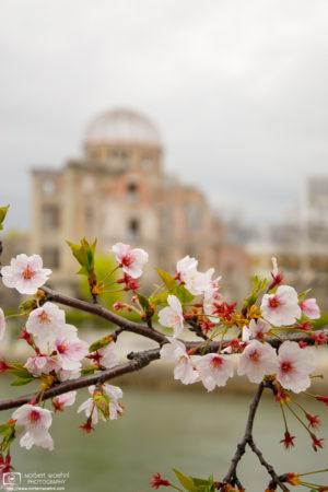 Sakura Hanami at A-Bomb Dome, Hiroshima, Japan Photo