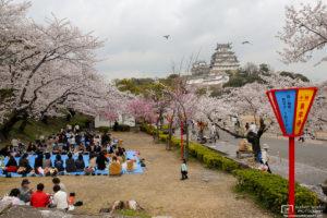 Sakura Hanami at Himeji Castle, Himeji, Japan Photo