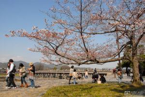 Sakura Hanami at Arashiyama, Kyoto, Japan Photo