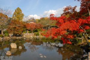 Autumn at Maruyama Park, Kyoto, Japan Photo