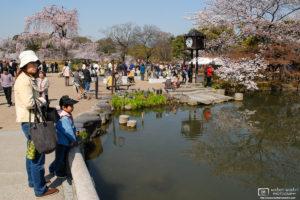 Sakura Hanami at Maruyama Park, Kyoto, Japan Photo