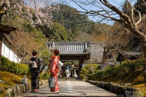 Sakura Hanami at Nanzenji Temple, Kyoto, Japan Photo