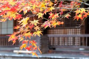 Autumn at Jojakkoji Temple, Sagano, Kyoto, Japan Photo