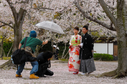 A late cherry blossom season photoshoot at Korakuen, one of the Three Great Gardens of Japan located in Okayama.