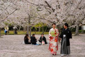 Sakura Hanami at Korakuen, Okayama, Japan Photo