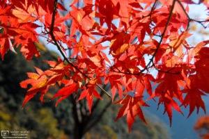 Autumn at Ukan Valley, Okayama Prefecture, Japan Photo