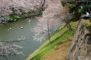 Sakura Hanami at Kitanomaru Garden, Tokyo, Japan Photo