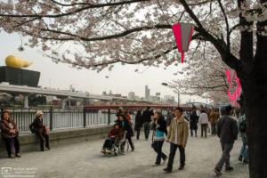 Sakura Hanami along the Sumida River, Tokyo, Japan Photo