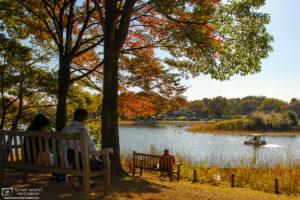 Autumn at Showa Kinen Memorial Park, Tachikawa, Tokyo, Japan Photo