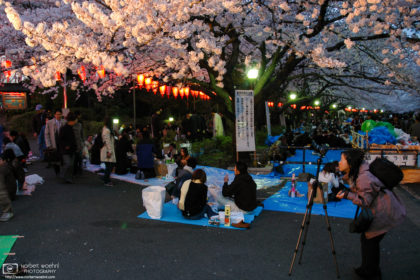 A photographer is framing her shot of illuminated cherry blossoms at Ueno Park in Tokyo, Japan.