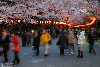Sakura Cherry Blossom Illumination at Ueno Park, Tokyo, Japan Photo