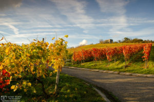 Autumn Vineyard and Helfenberg Castle, Baden-Württemberg, Germany Photo