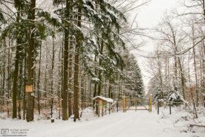 Winter Forest, Walddorfhaeslach, Baden-Wurttemberg, Germany Photo
