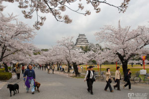Walking the Dogs during the cherry blossom season at Himeji Castle in Hyogo Prefecture, Japan.