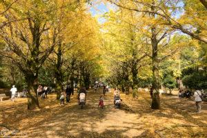Autumn Yellow, Hikarigaoka Park, Tokyo, Japan Photo
