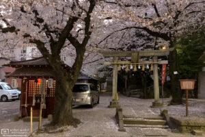 An early-evening impression of late cherry blossom season at Koyasu Shrine in Itabashi-ku, Tokyo, Japan.