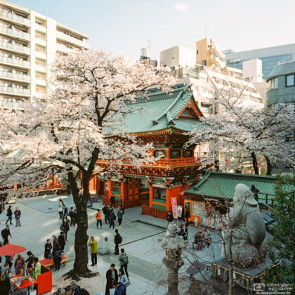 Cherry blossom season at Kanda Myōjin in Tokyo, a Shinto shrine whose origins date back to the 8th century.