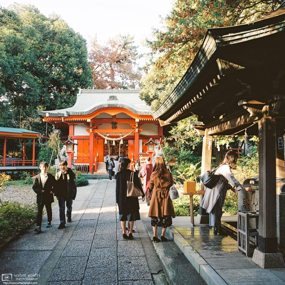 A bright autumn day at Jiyugaoka Kumano Jinja, a small shrine in the Meguro ward of Tokyo, Japan.