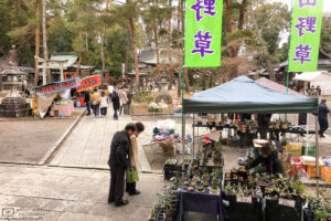 At a flea market stand inside Imamiya Shrine in Kyoto, Japan, a variety of plants is for sale.