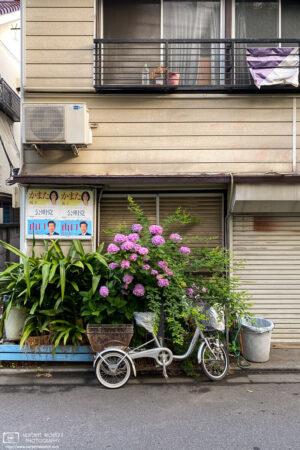A still life from an early-morning walk around Ohara-cho in Itabashi-ku, Tokyo, Japan.