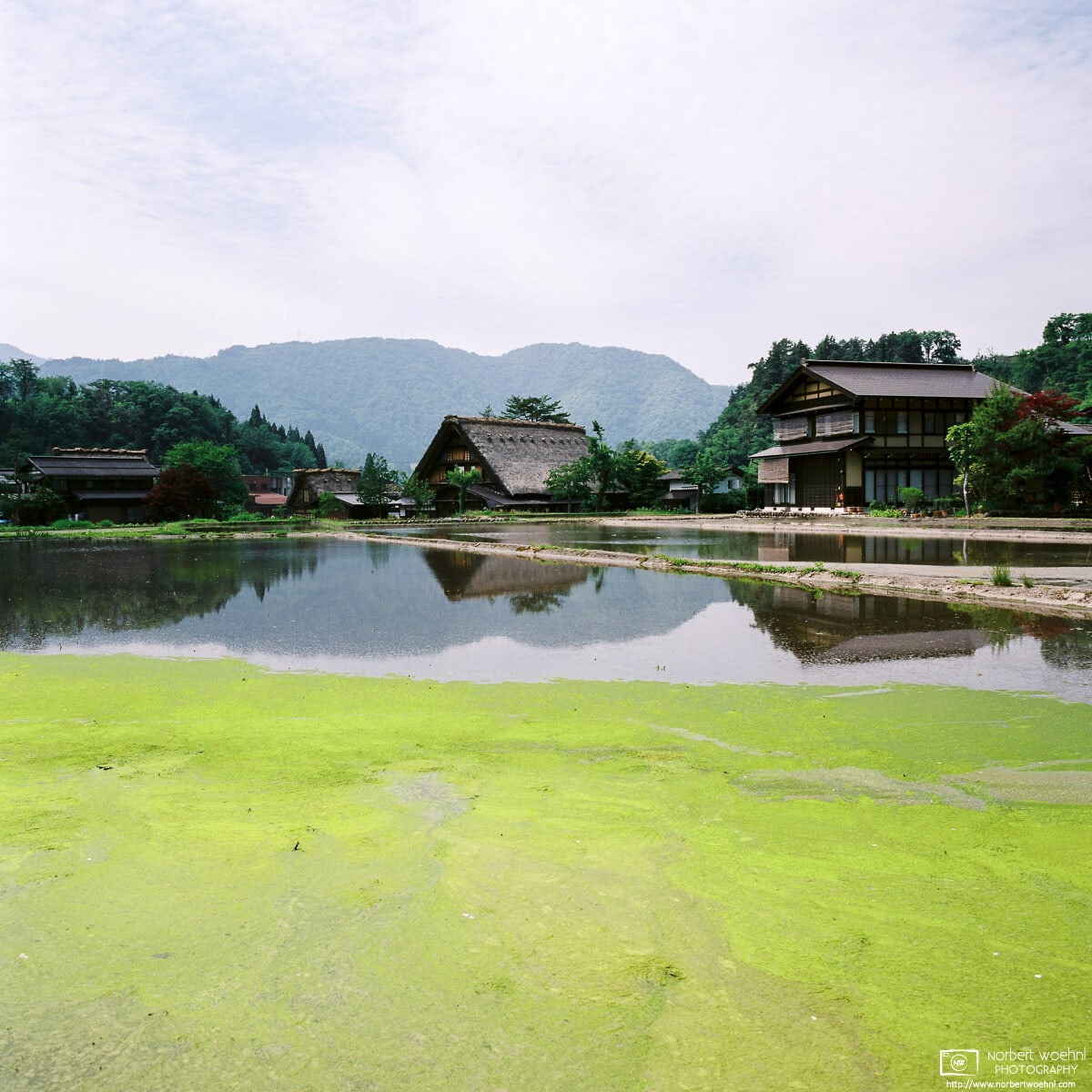 A colorful end-of-May impression from Ogimachi Village in Shirakawa-gō, Gifu Prefecture, Japan.