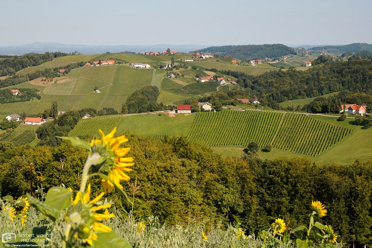 A view across the rolling vineyards of southern Styria, Austria, close to the Slovenian border.